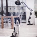 Duża czarna lampa i pies w pokoju dziennym