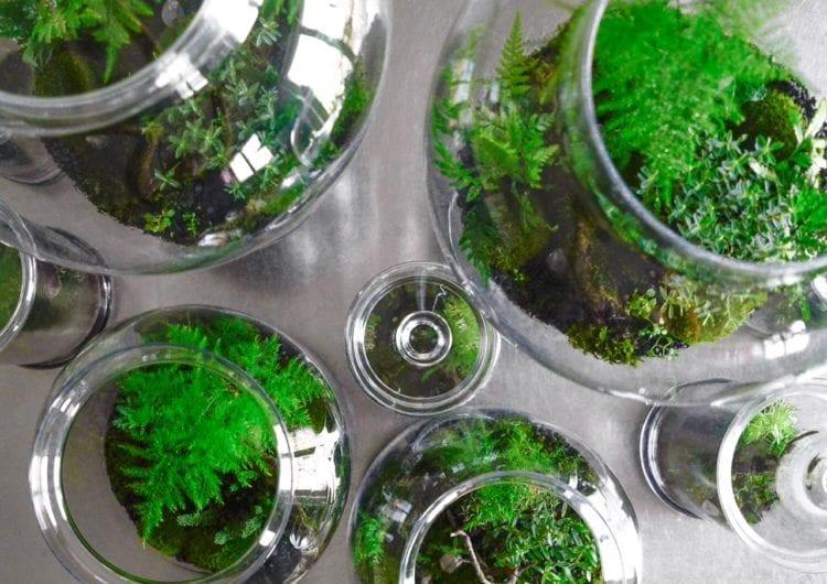 GreenBells: unikatowa, żywa dekoracja