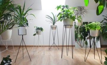 Bujnie: sposób na domową dżunglę