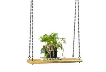 Some Home Design: nowy pomysł na rośliny