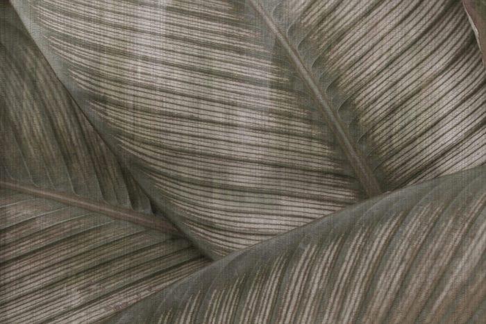 Jasna grafika ścienna z motywem jasnych liściach monster od włoskiej marki Glamora