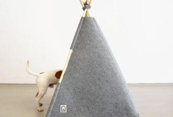 HELLO PETS: design dla zwierzaka