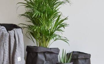Zaproś rośliny do swojego wnętrza – moyha