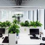 Strefa co-workingowa z elementami zielonymi w siedzibie firmy Pivexin Technology projektu pracowni Mus Architects