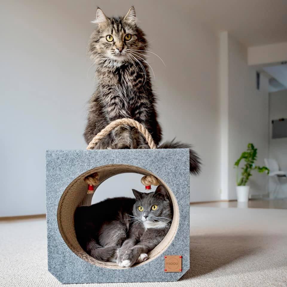 MIOOU- wyjątkowy design dla zwierząt - projekt Katarzyna Galicka-Szer