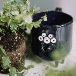 Czarny kubek z ceramiki w kształcie nietoperza stojący na stole przy roślinie