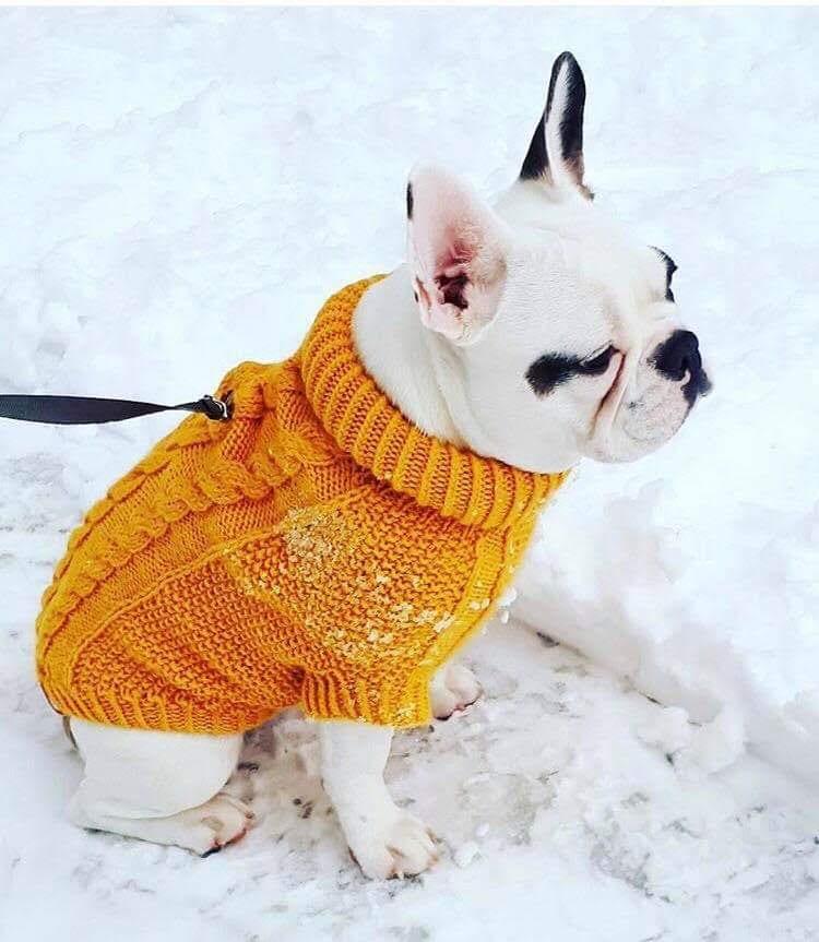 Co pod choinkę? 83 pomysły na prezent Made in Poland - inspiracje i porady na świąteczne prezenty - sweter dla psa Wooldog