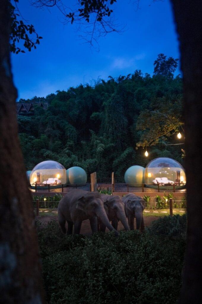 Jungle Bubbles - nocleg wśród wędrujących słoni - Anantara Golden Triangle Elephant Camp & Resort