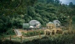 Jungle Bubbles – nocleg wśród wędrujących słoni