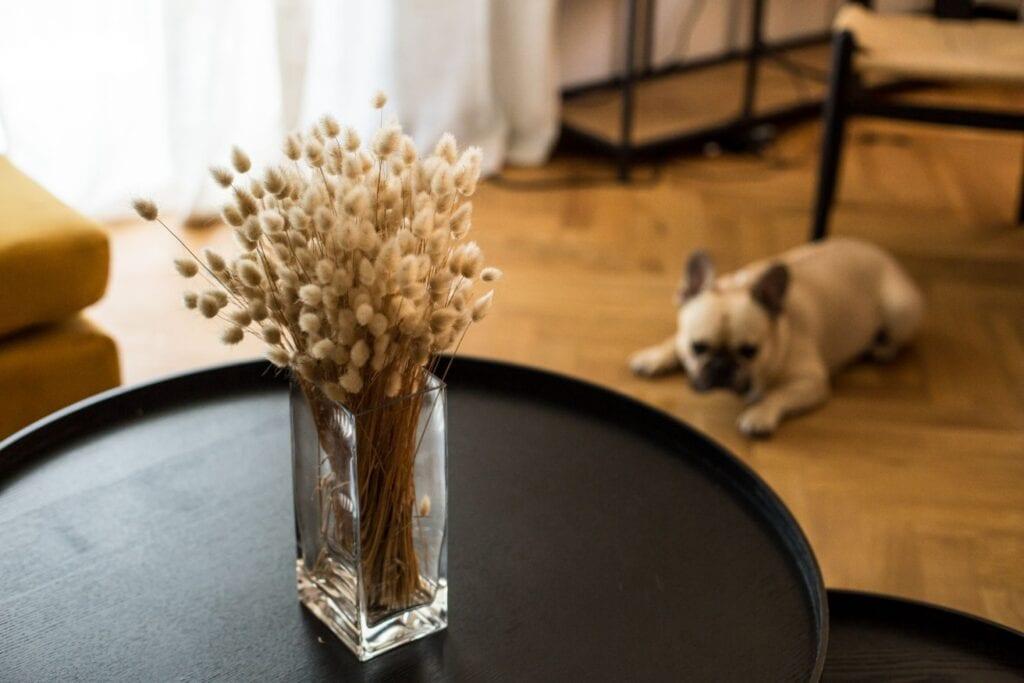 Marka Blosmi i nowe życie kwiatów suszonych - Bogna Brodowicz