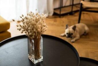 Marka Blosmi i nowe życie kwiatów suszonych