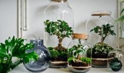 Las w słoiku – jak zrobić, gdzie kupić – porady…