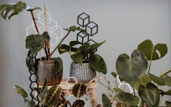 Plantastick – biodegradowalne podpórki dla roślin