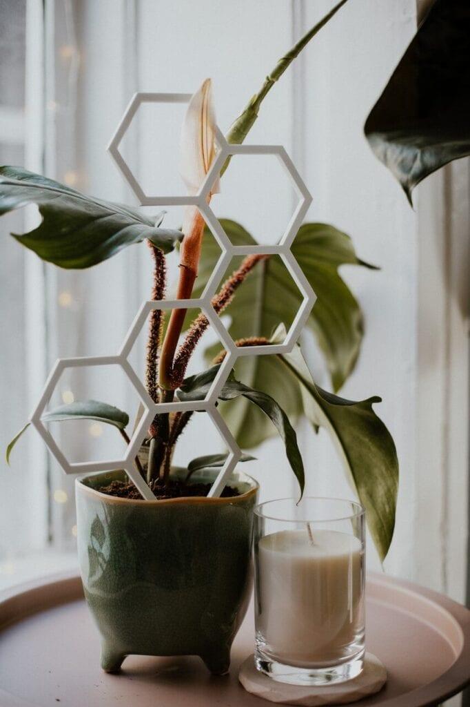 Plantastick - biodegradowalne podpórki dla roślin - projekt polskiej marki za którą stoi Weronika i Bartek