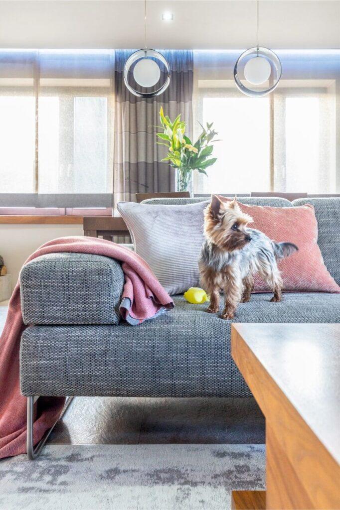 York na szarek kanapie w salonie w projekcie Agnieszki Morawiec z Grupa Siedem