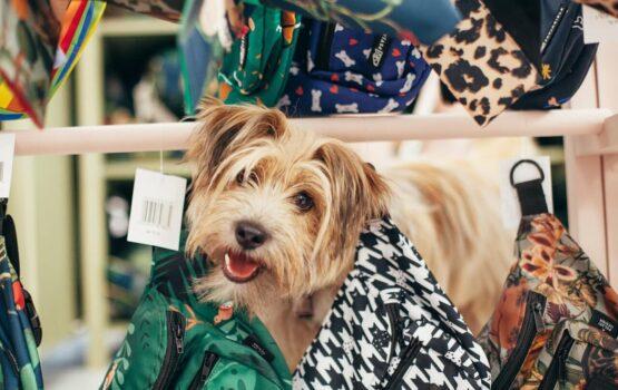 Psyjaciele – marka stworzona z miłości do zwierząt