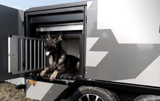 Wyjątkowa przyczepa do przewozu psów